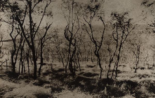 Kaupo Trees