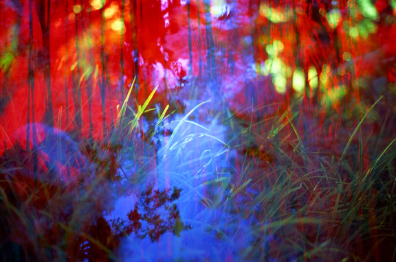 Magical Grasses